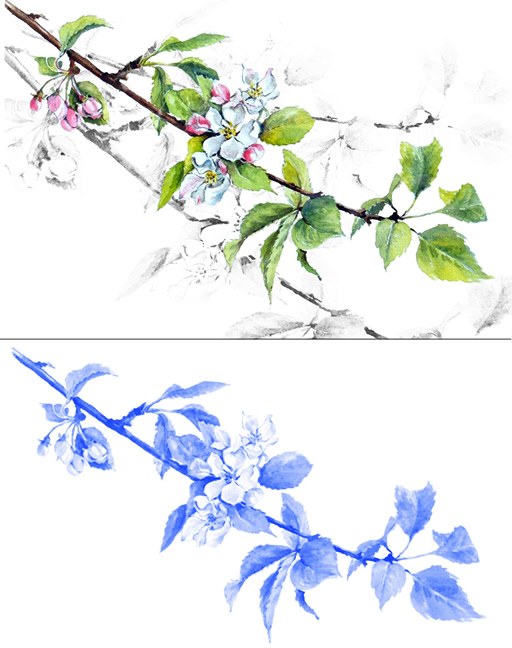 Apple Blossom Examples